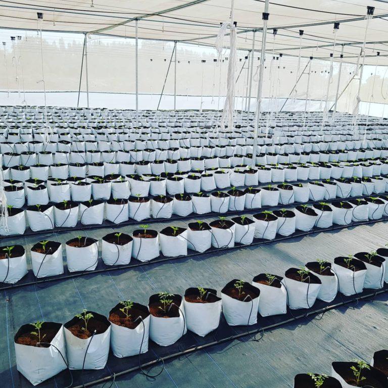 Grow bag farms 4