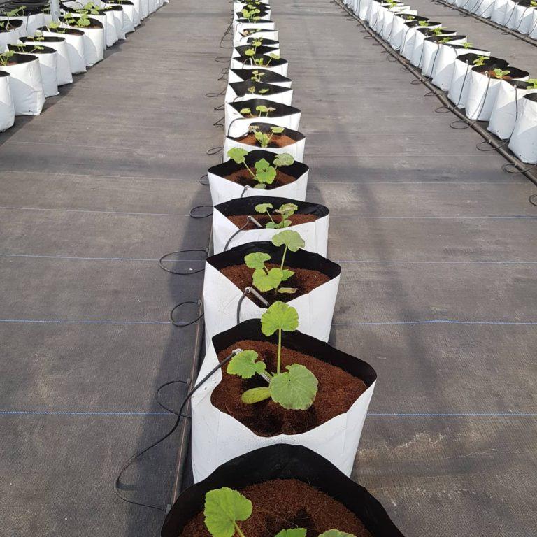 Grow bag farms 5