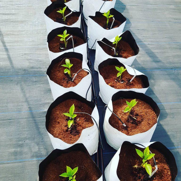 Grow bag farms 6