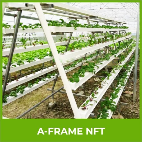 A frame Nft