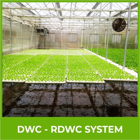 Dwc Rdwc System