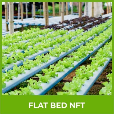 Flat Bed Nft