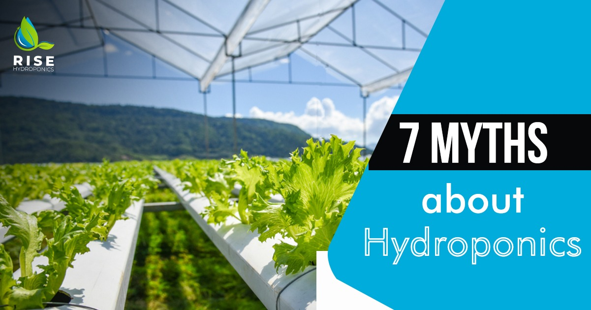Hydroponics Agriculture
