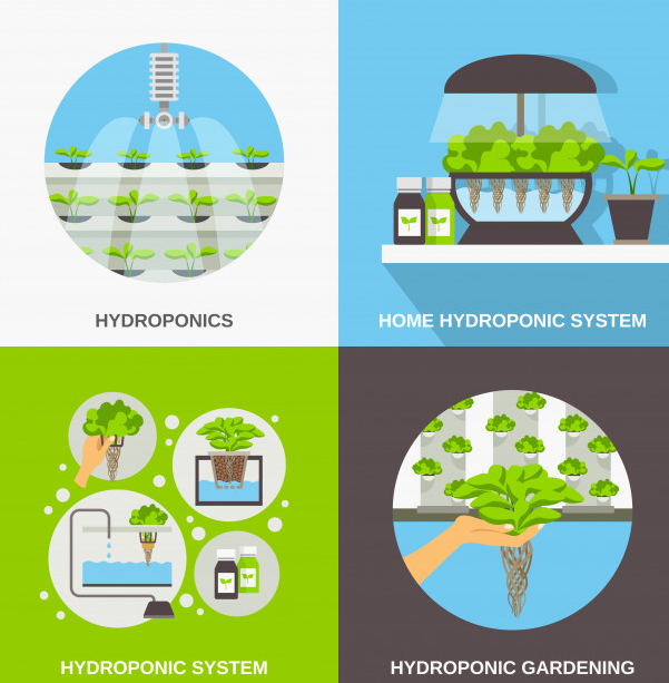 Hydroponic Agriculture