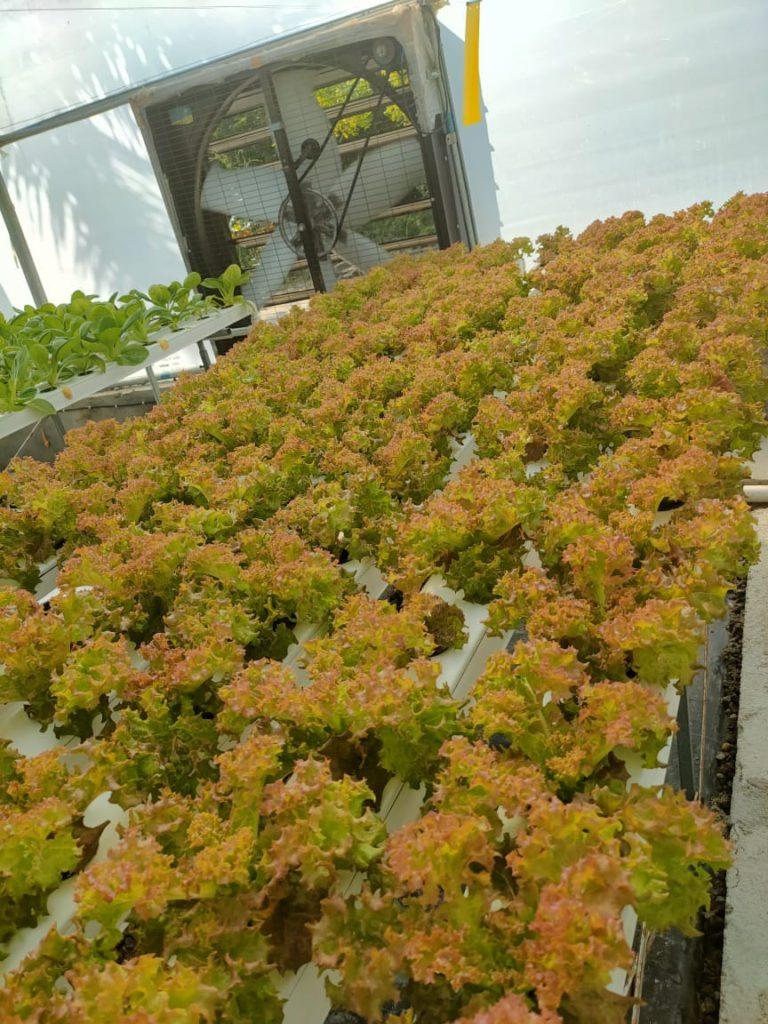 Grow bag farms 2