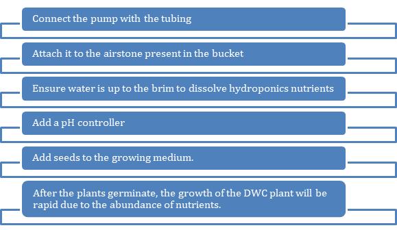 Deep water culture Steps