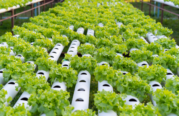 Can You Profit From Hydroponics?